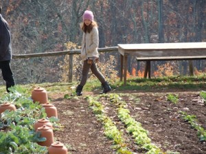 Review of the Garden crops while visiting Lynchburg Grow!
